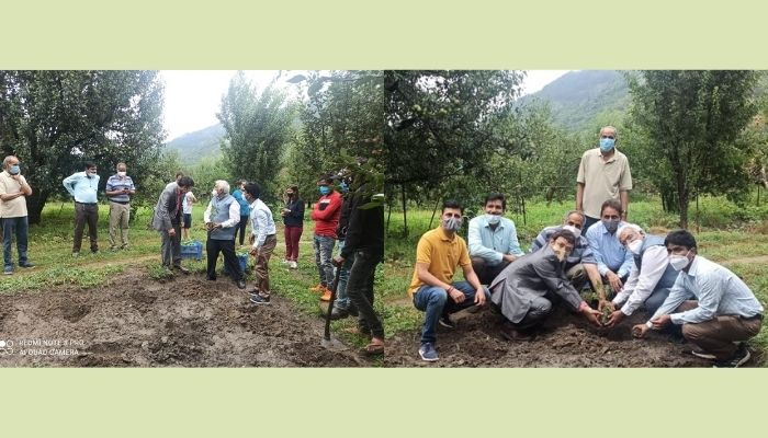 First-ever Monk Fruit Cultivation in India by CSIR-IHBT